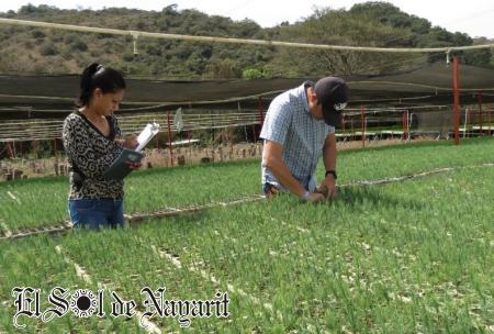 S lo planta de calidad para nayarit conafor el sol de for Viveros forestales conafor