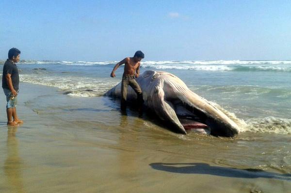 La vaquita playa del carmen bikini contest wet tshirt - 4 1