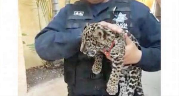Detienen a 4 sujetos con jaguar, armamento militar y marihuana en ...