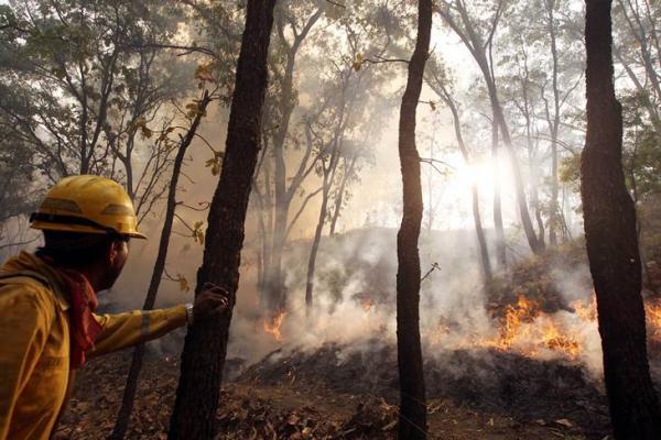 Más de 30 mil hectáreas arrasadas en 186 incendios forestales