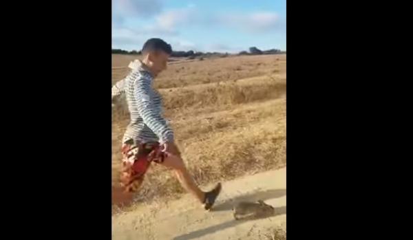 Joven patea a un conejo en España y enfurece las redes sociales