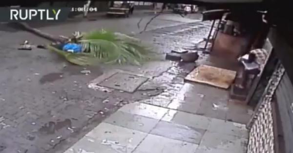 Palmera mata a famosa conductora