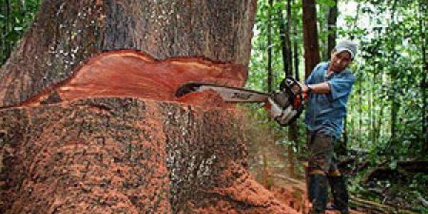 Tala de bosques el sol de nayarit for Tala de arboles madrid