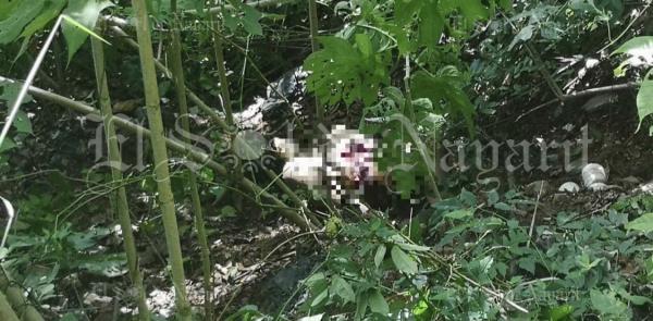 Hallan cuerpo de una mujer asesinada en Cofradía de Chocolón, Xalisco - El Sol de Nayarit